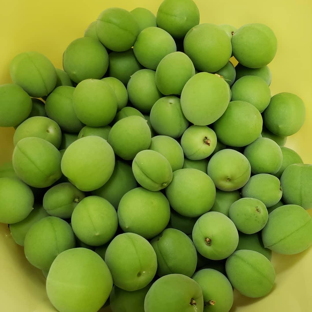 梅を収穫!  ウエルハイムヨコゼ中庭で梅を収穫しました。利用者さんと梅干を漬けたいと思います